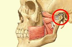 височно-нижнечелюстной сустав анатомия строение